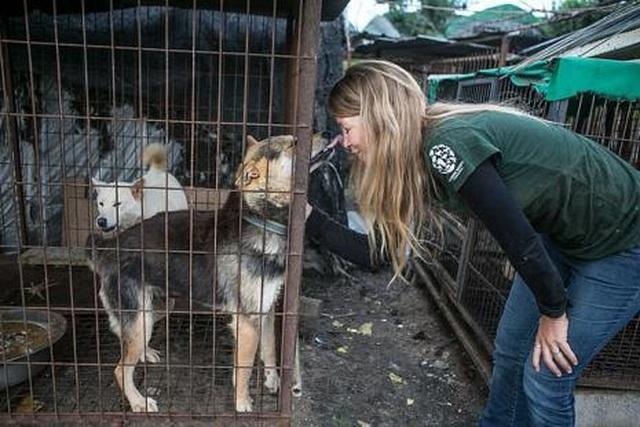 Chợ thịt chó nổi tiếng chính thức đóng cửa - 6
