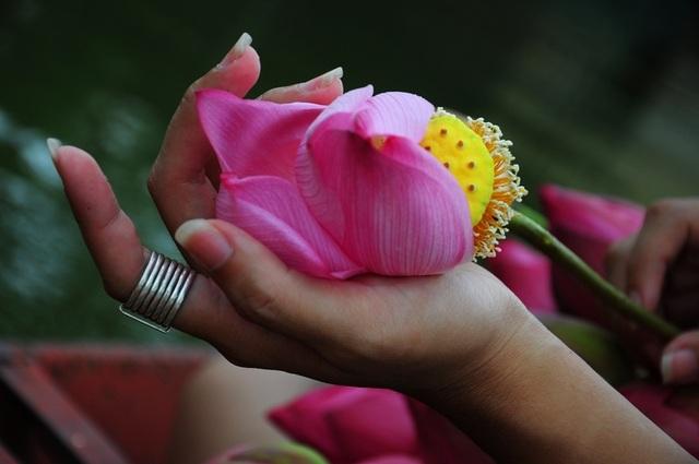 Bí quyết nằm lòng phân biệt hoa sen với quỳ để tránh bị lừa khi mua - 2