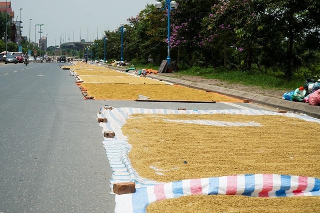Cảnh phơi thóc chiếm phần lớn lòng đường ở Hà Nội - 3