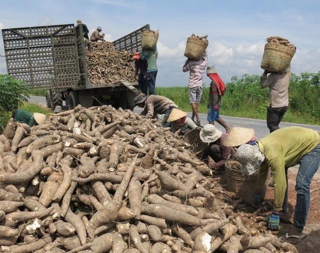 Trung Quốc dựng rào siết chặt, thế mạnh tỷ USD Việt Nam lao đao - 1