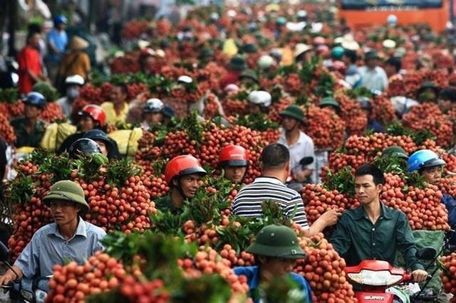 Trung Quốc chỉ mua trái cây Việt Nam… không có lá? - 1