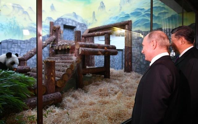 """Món quà """"quý hiếm"""" ông Tập Cận Bình tặng Tổng thống Putin - 1"""