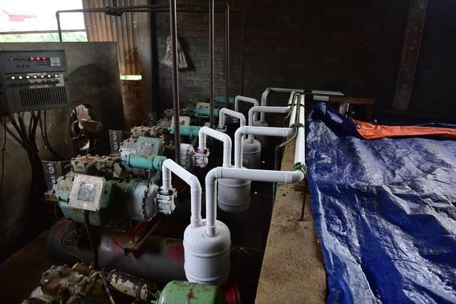 Bên trong xưởng đá lạnh khổng lồ ướp vải thiều Bắc Giang - 4