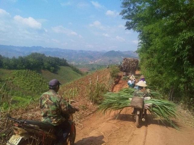 Không có biện pháp bảo vệ ngành mía đường, hàng triệu lao động, hộ dân có nguy cơ tái nghèo - 2