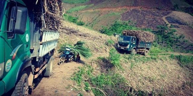Không có biện pháp bảo vệ ngành mía đường, hàng triệu lao động, hộ dân có nguy cơ tái nghèo - 3