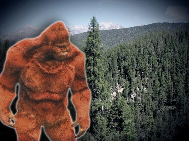 Nguồn gốc thực sự các mẫu lông của Người tuyết mới được FBI tiết lộ - 1