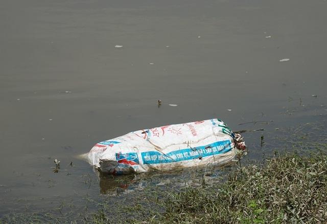 Lợn chết bị vứt bừa, bốc mùi nồng nặc ở xã ngoại thành Hà Nội - 8