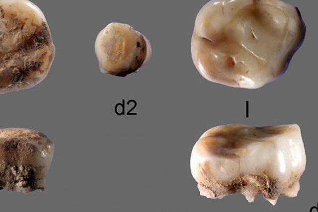 Phát hiện người Thời kỷ băng hà ở Siberia thông qua răng sữa - 1