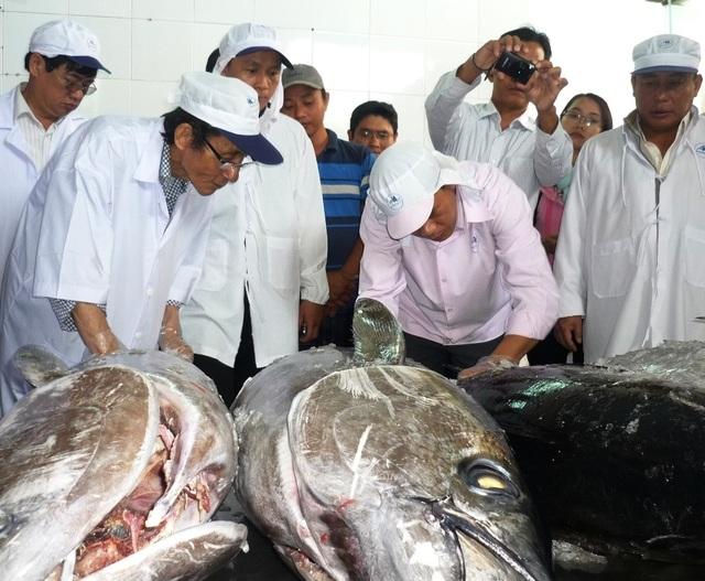"""""""Giấy thông hành"""" cho cá ngừ đại dương vào thị trường châu Âu - 1"""