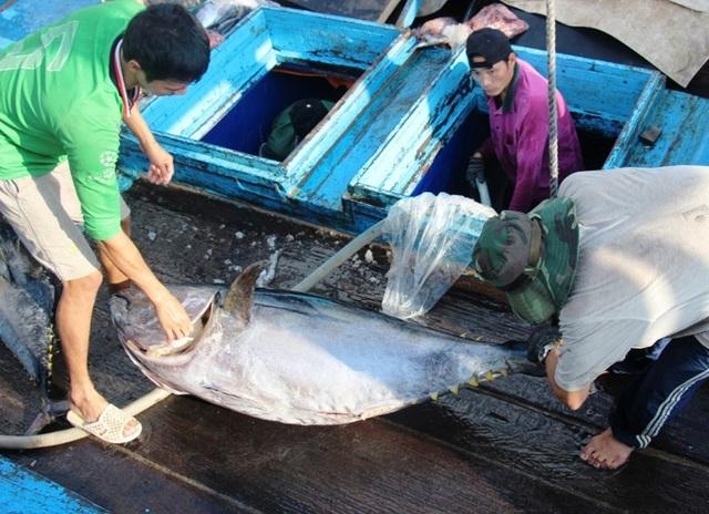 """""""Giấy thông hành"""" cho cá ngừ đại dương vào thị trường châu Âu - 3"""