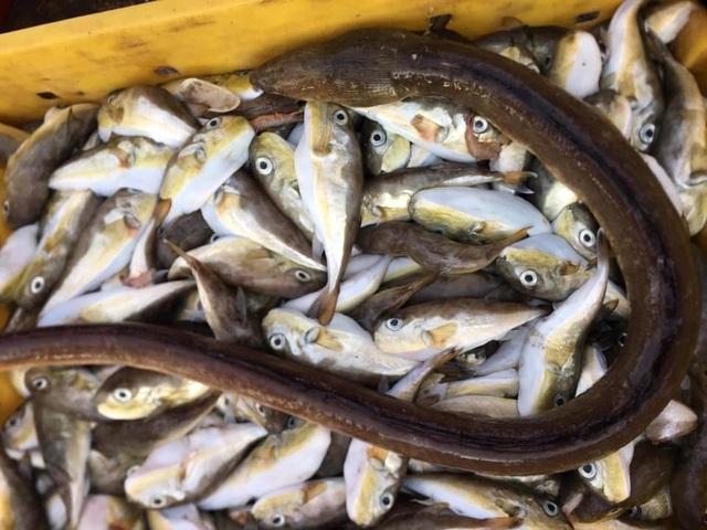 Thực hư loại cá đùi gà bán tràn lan trên mạng - 2