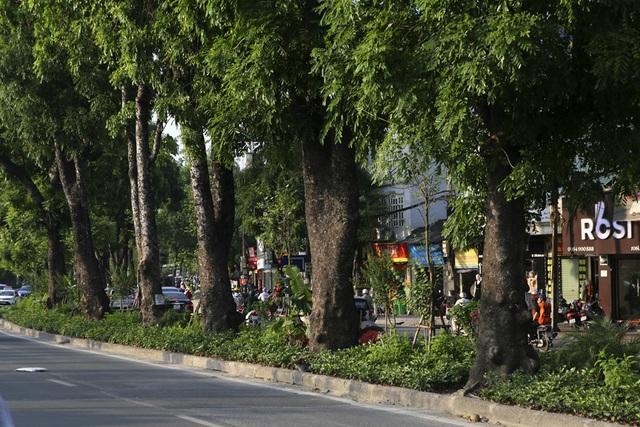 Những dải phân cách xanh mướt bóng cây ở Hà Nội - 11