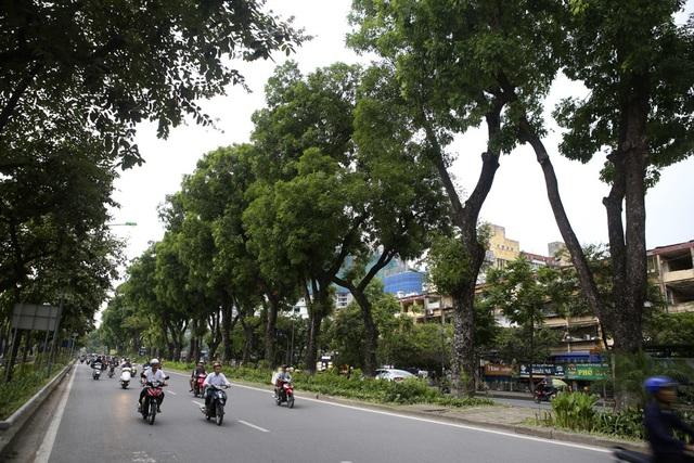 Những dải phân cách xanh mướt bóng cây ở Hà Nội - 13