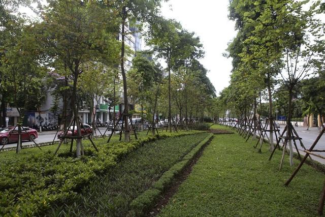 Những dải phân cách xanh mướt bóng cây ở Hà Nội - 14