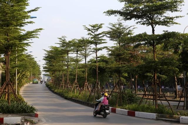 Những dải phân cách xanh mướt bóng cây ở Hà Nội - 3