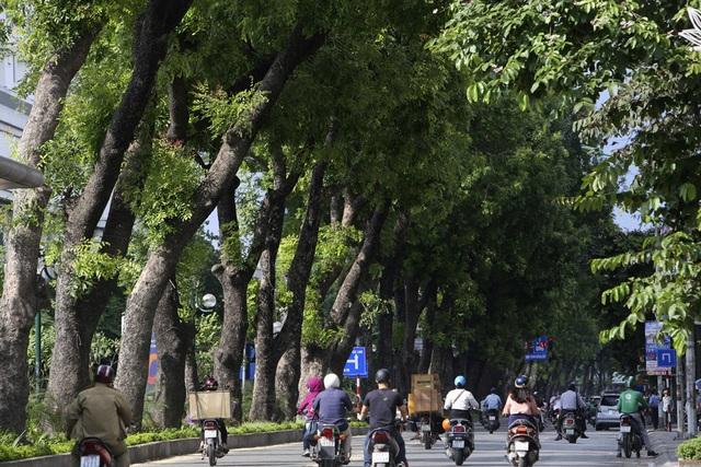 Những dải phân cách xanh mướt bóng cây ở Hà Nội - 6