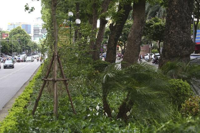 Những dải phân cách xanh mướt bóng cây ở Hà Nội - 7