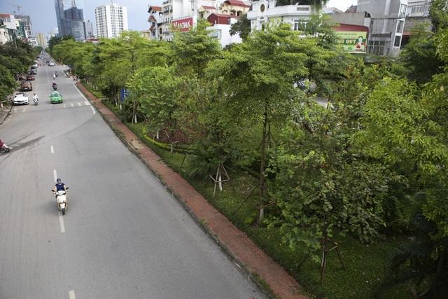 Những dải phân cách xanh mướt bóng cây ở Hà Nội - 8
