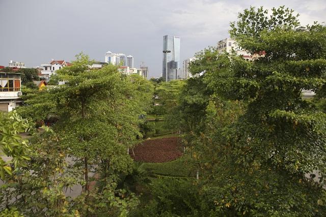 Những dải phân cách xanh mướt bóng cây ở Hà Nội - 9