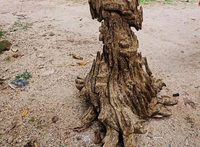 Lặn lội hơn 20 năm, đại gia Hà thành tốn hàng đống tiền để có bộ sưu tập từ gỗ trầm lũa - 6