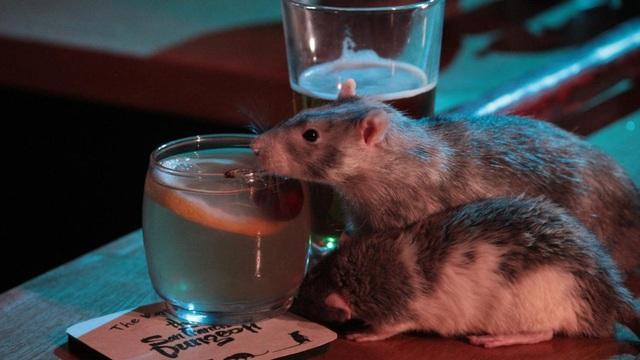Chi tiền triệu để uống cocktail cùng … chuột cống - 1