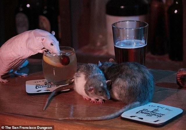 Chi tiền triệu để uống cocktail cùng … chuột cống - 2