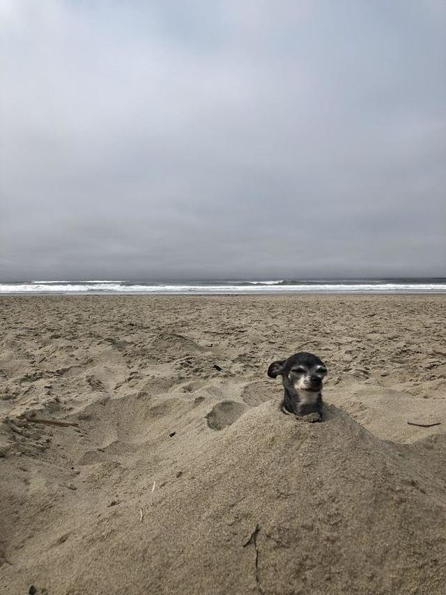 """Những hình ảnh siêu hài hước vô tình """"chộp"""" được trên bãi biển - 10"""