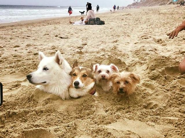 """Những hình ảnh siêu hài hước vô tình """"chộp"""" được trên bãi biển - 5"""