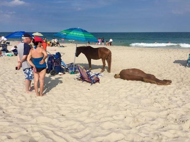 """Những hình ảnh siêu hài hước vô tình """"chộp"""" được trên bãi biển - 8"""