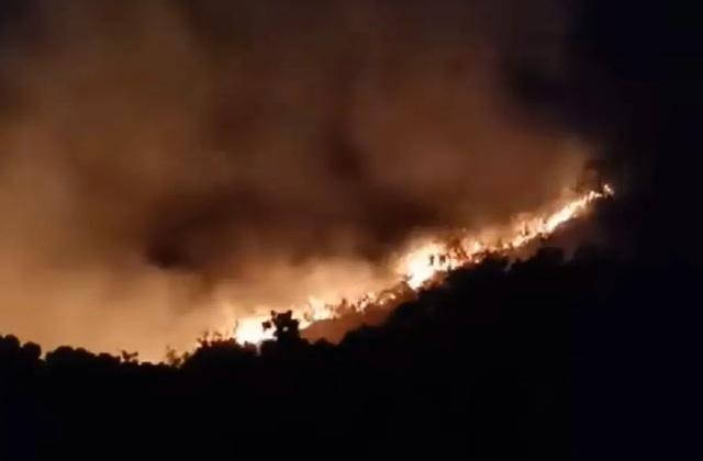 Cháy lớn trên bán đảo Sơn Trà - 2