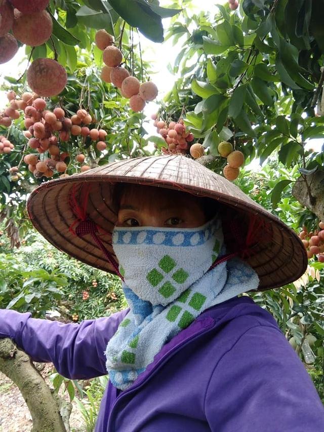 Phát sốt với vườn vải thiều Lục Ngạn ra quả mọc chi chít ở thân - 4