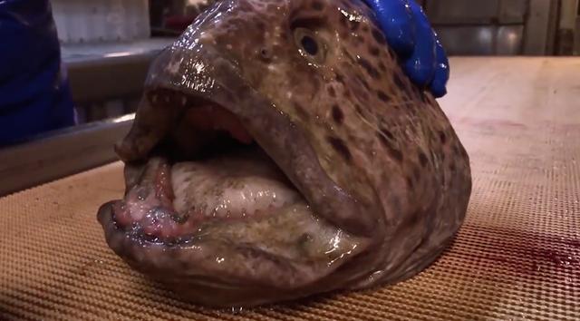 """Kinh hoàng lươn """"quái vật"""" nghiền nát lon nước ngọt dù đã đầu lìa khỏi thân - 1"""