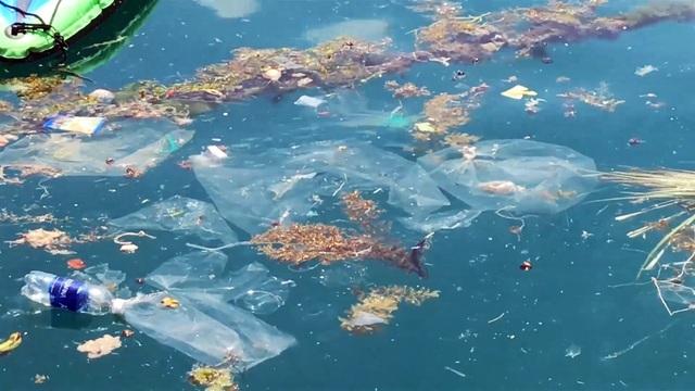 Phú Yên: Vịnh Vũng Rô đang chết dần chết mòn vì rác thải nhựa! - 2