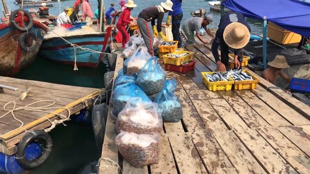 Phú Yên: Vịnh Vũng Rô đang chết dần chết mòn vì rác thải nhựa! - 7