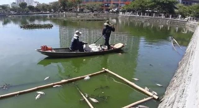 Cá chết nổi trắng hồ ở trung tâm thành phố Đà Nẵng - 3