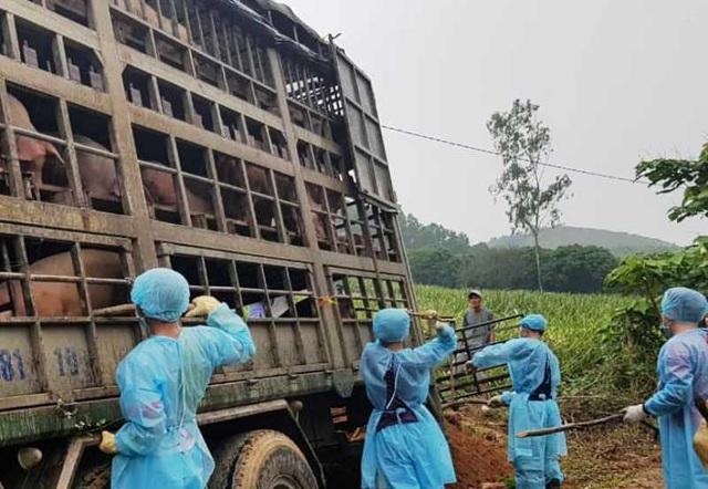 Phòng chống dịch tả lợn châu Phi còn yếu kém, chủ tịch tỉnh ra công điện - 2