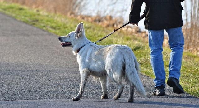 """Chó bị """"lây"""" căng thẳng từ chủ nhân - 1"""