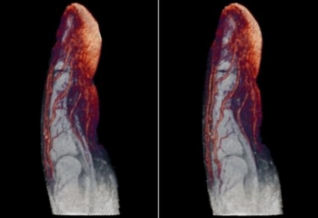 Những hình chụp X-quang giúp chúng ta hiểu hơn về cơ thể mình - 5