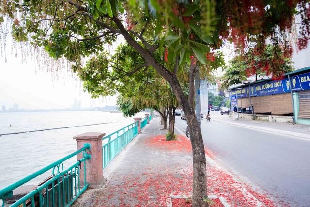 Khung cảnh lãng mạn mùa hoa lộc vừng trải thảm đỏ ven Hồ Tây - 10