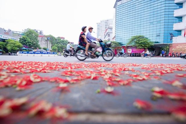 Khung cảnh lãng mạn mùa hoa lộc vừng trải thảm đỏ ven Hồ Tây - 11