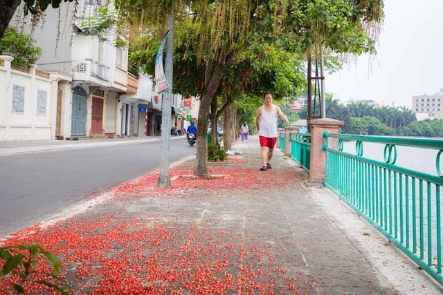 Khung cảnh lãng mạn mùa hoa lộc vừng trải thảm đỏ ven Hồ Tây - 4