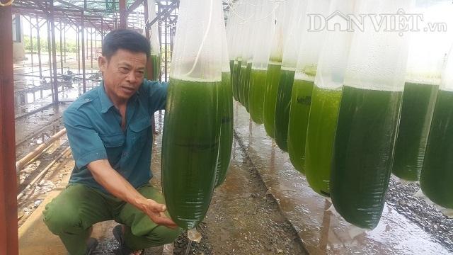 Chuyện lạ Thái Bình: Chế ngàn lít nước xanh lè, rót bán hàng tỷ đồng - 1