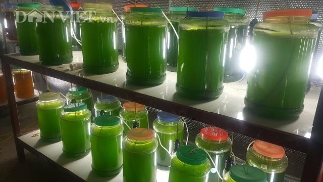 Chuyện lạ Thái Bình: Chế ngàn lít nước xanh lè, rót bán hàng tỷ đồng - 2