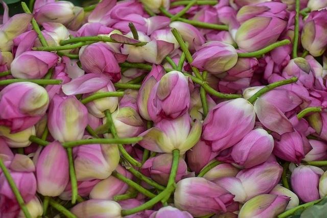 Đệ nhất trà Hà Nội: Làm từ 1000 bông sen, bán giá đắt như vàng - 12