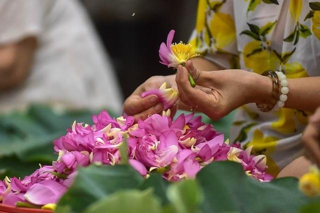 Đệ nhất trà Hà Nội: Làm từ 1000 bông sen, bán giá đắt như vàng - 13