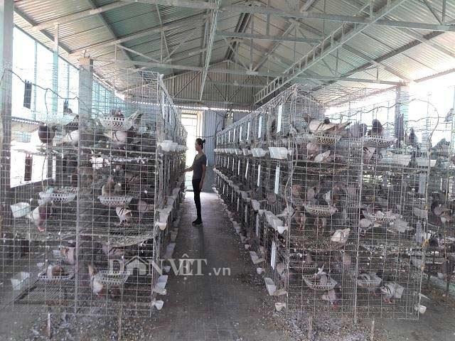 Hà Tĩnh:  Xây lầu cho chim ở, mỗi tháng bỏ túi hơn 20 triệu đồng. - 1