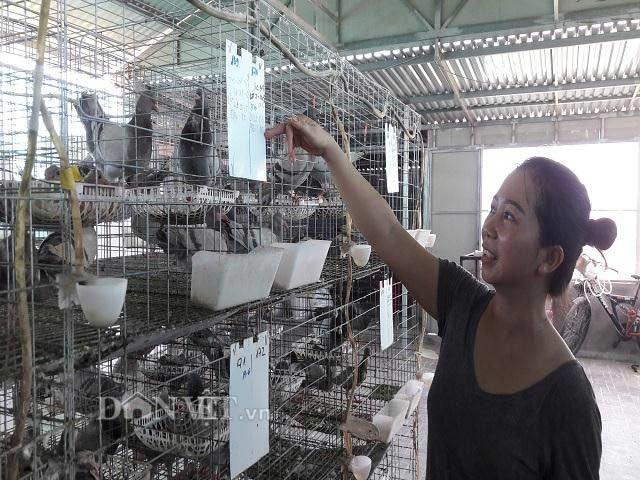 Hà Tĩnh:  Xây lầu cho chim ở, mỗi tháng bỏ túi hơn 20 triệu đồng. - 2