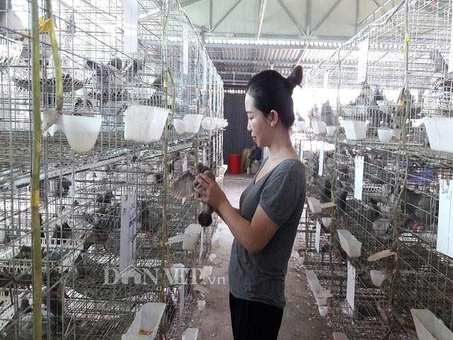 Hà Tĩnh:  Xây lầu cho chim ở, mỗi tháng bỏ túi hơn 20 triệu đồng. - 3