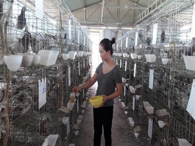Hà Tĩnh:  Xây lầu cho chim ở, mỗi tháng bỏ túi hơn 20 triệu đồng. - 5