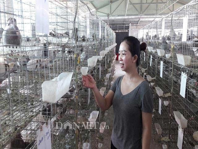 Hà Tĩnh:  Xây lầu cho chim ở, mỗi tháng bỏ túi hơn 20 triệu đồng. - 6